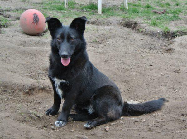 Kaiya sociaal hondje zoekt leuk baasje