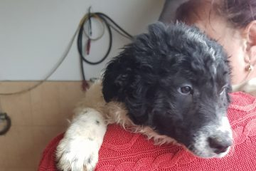 Pup Nana zwart-witte krullen