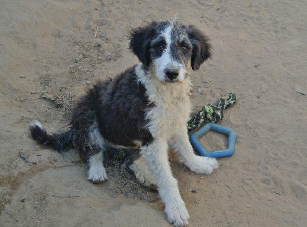 Pup Nela zwart wit hondje