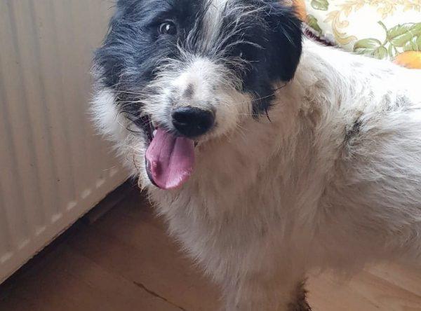 Roberta lieve hond van 1 jaar