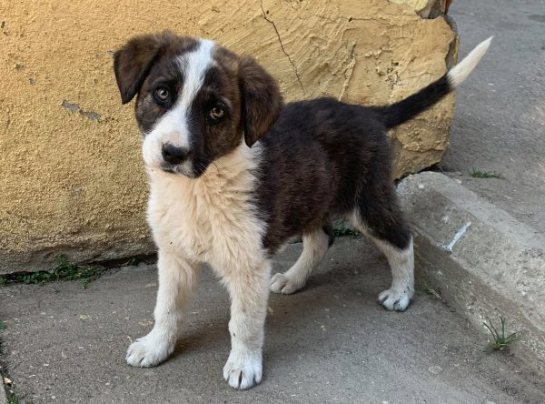 Pup Denzel prachtig hondje