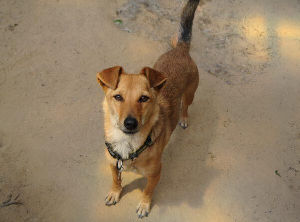 Freida klein hondje