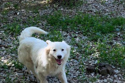 Alba vrolijk wit hondje