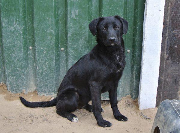 Blacky prachtig zwart hondje