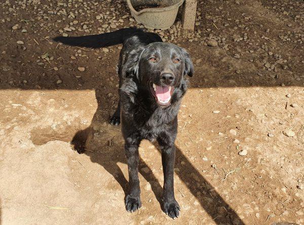 Flo prachtige zwarte jonge hond