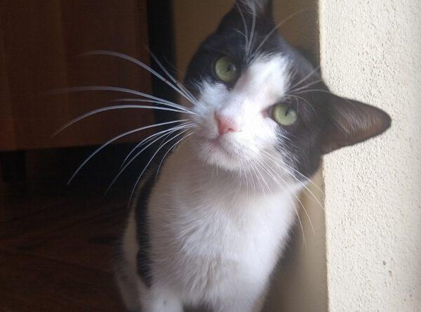 Tiny mager katje