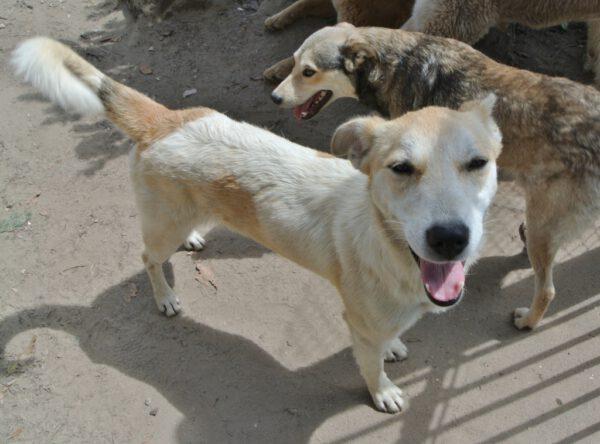 Ayra aanhankelijke hond