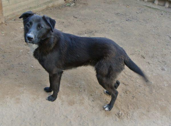 Balou lieve hond