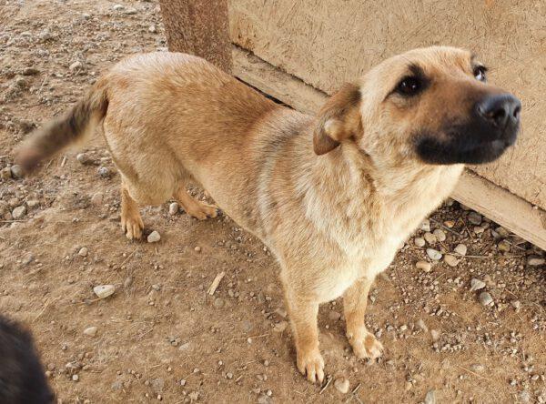 Bonita jong hondje in het asiel