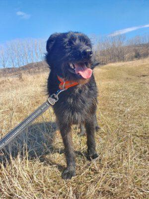 Corbu leuke zwarte hond