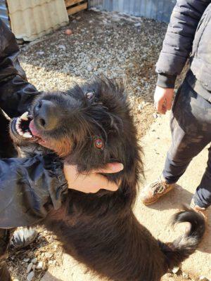 Corbu leuke ruwharige hond