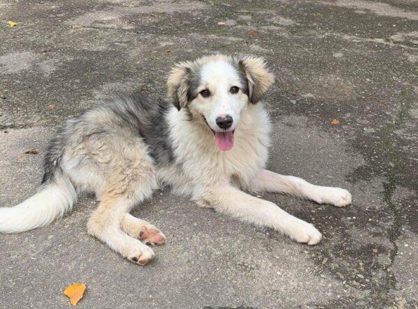 Lina lieve puppy