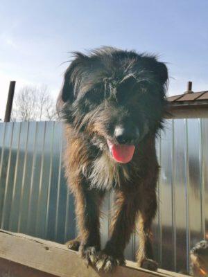 Stelu lieve hond uit Roemenië
