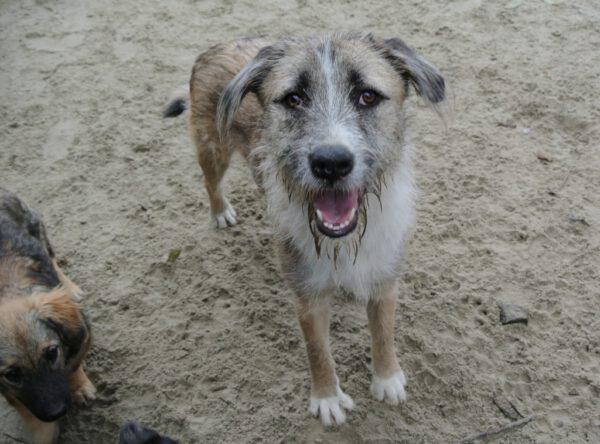 Ruwhaar Ymir leuke hond