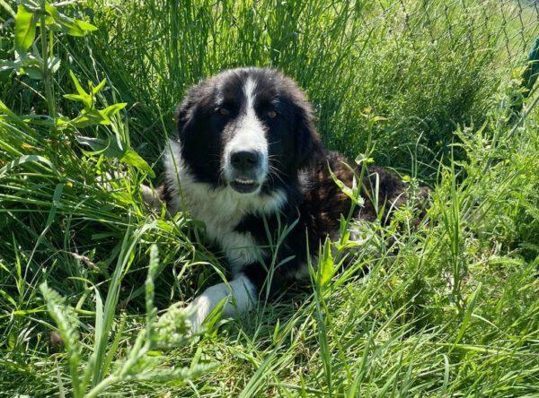 Florica lieve kalme hond