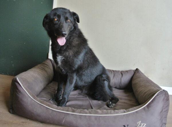 Indiana mooie zwarte hond