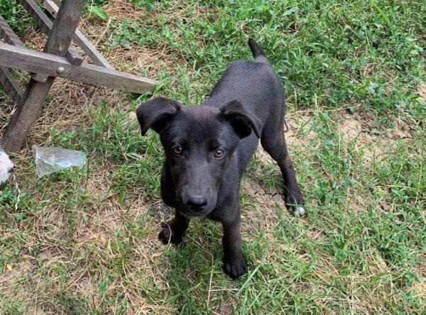 Puppy June zwart teefje