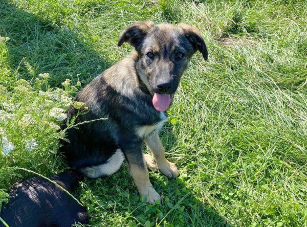 Martha lieve puppy