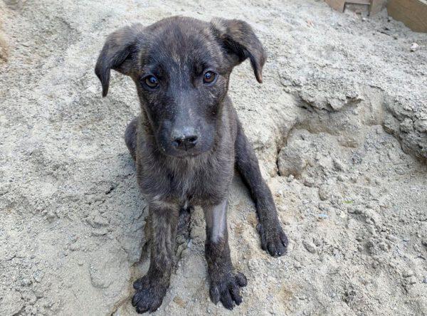 Pebbles klein pupje uit Roemenië