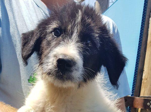 Pup Pippa lief meisje