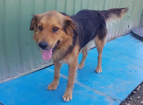 Hond Rex in het asiel
