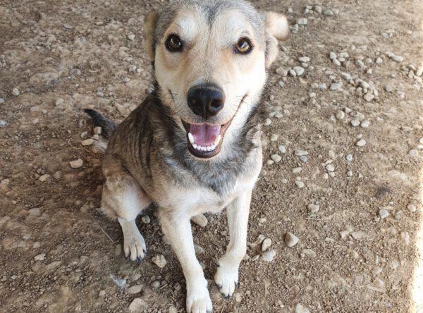 Suri vrolijk hondje in het asiel