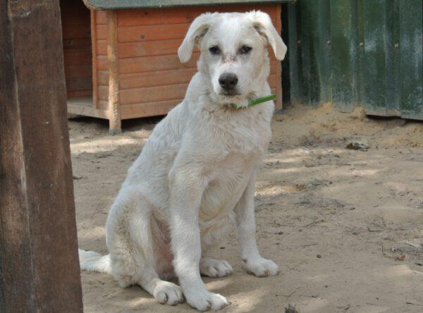 Jan grote witte pup