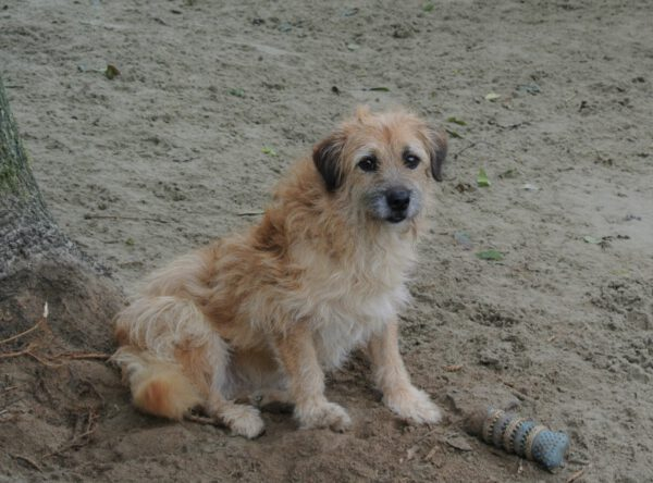 Lieve Tzitzi schattig hondje