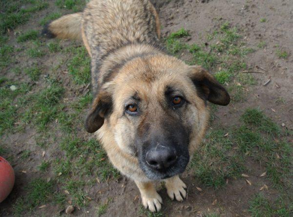 Alma grote hond