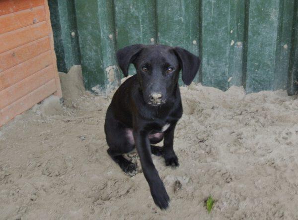Dexter slank zwart hondje