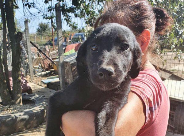 Puppy Dina zwart teefje