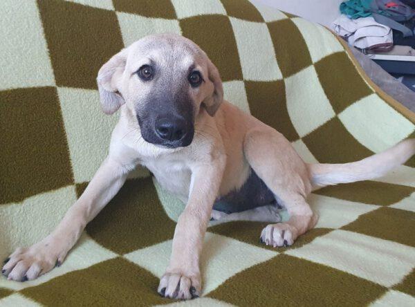 Pup Dolly met donkere snoet