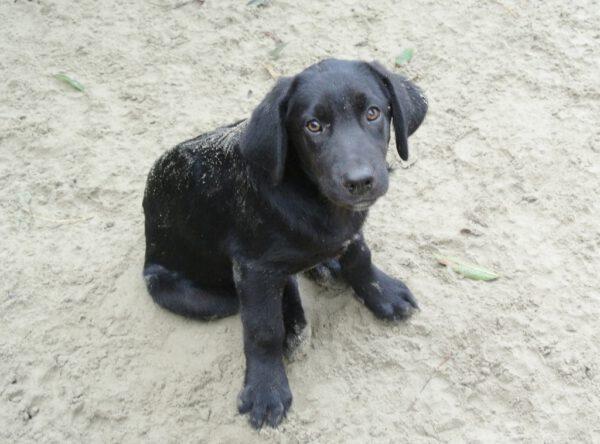 Dorian mooi zwart pupje