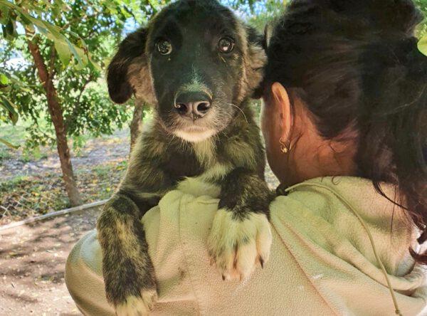 Puppy Frida met donker gestreept velletje