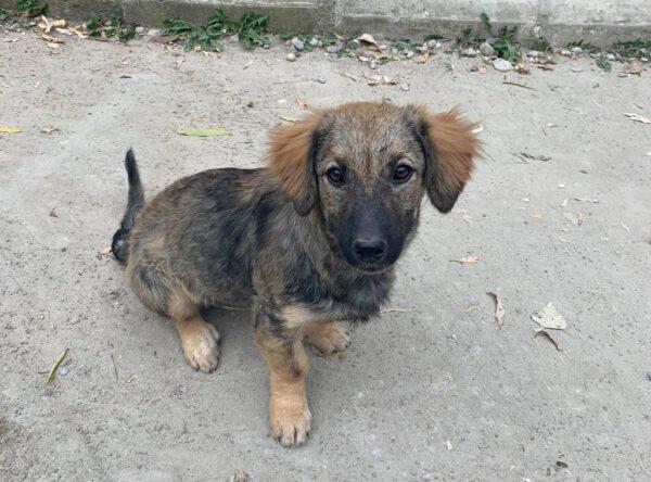 Pup Jill lief hondje
