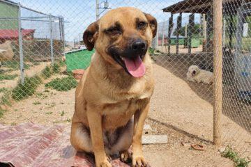Hond Julia in het asiel in Roemenië