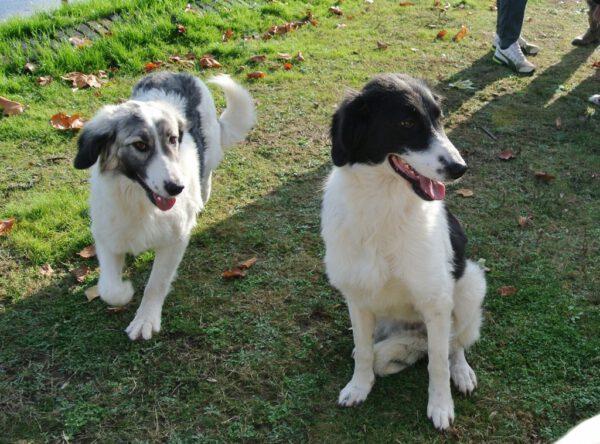 De zusjes Laica en Leya