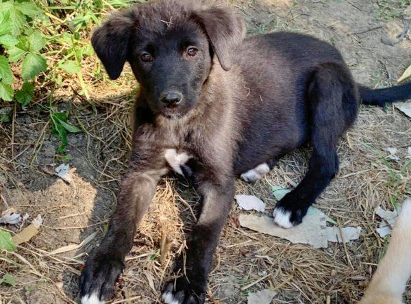 Puppy Macy zwart teefje