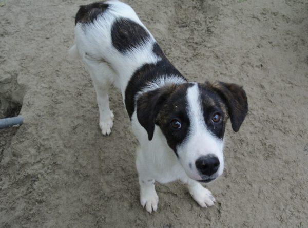 Pup Manfy leuk gevlekt hondje