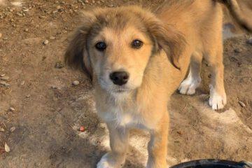 Puppy Melody lief hondje
