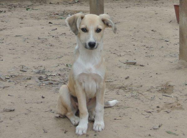 Puppy Nikki mooi meisje