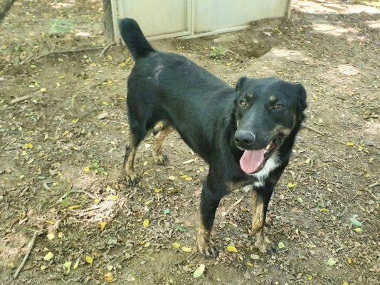 Pedro vrolijke jonge hond
