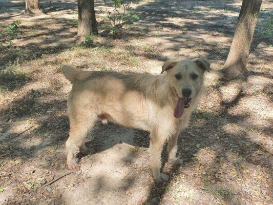 Sancho vrolijke hond in het asiel