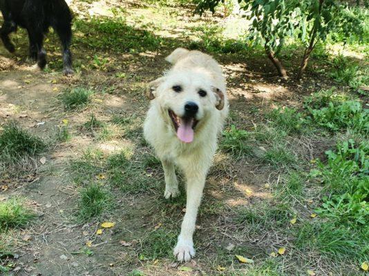Sancho vrolijke hond in het asiel in Roemenië