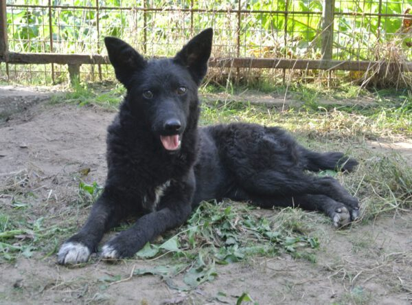 Sasha zwart krullend vachtje