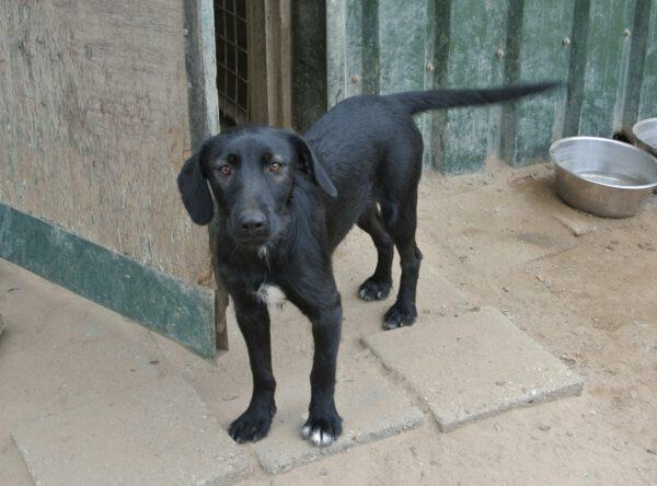 Tita zwart middelgroot hondje