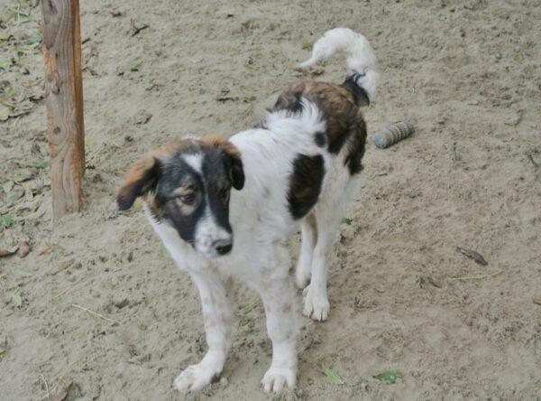 Pup Bente mooi hondje