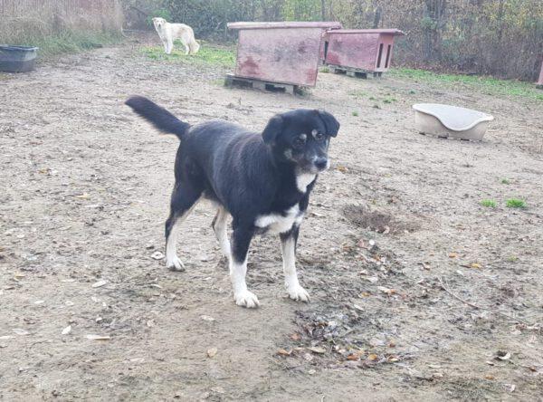 Esther lieve senior hond