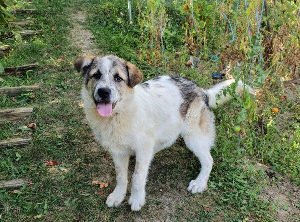 Fritz leuke hond van 6 maanden