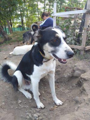 Hond Jamie in het asiel in Roemenié